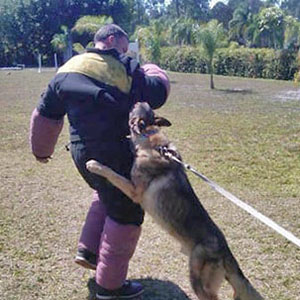 Vom Artiles Kennel - K9 Training Center for Personal