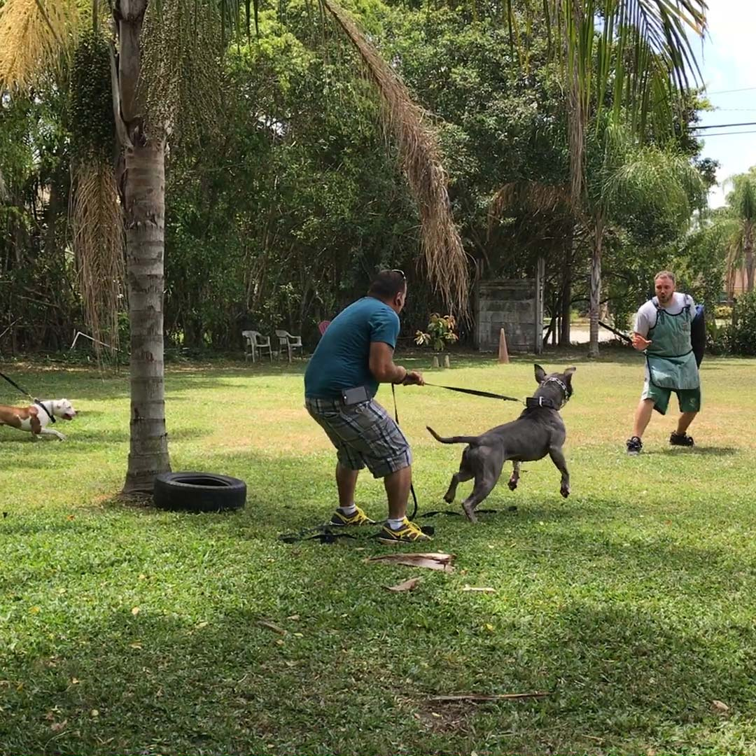 k9 training club