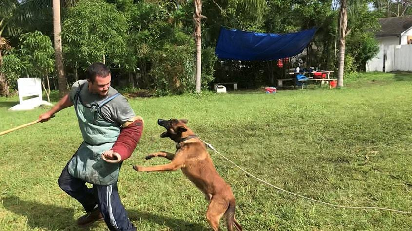 Protection Dog Training West Palm Beach